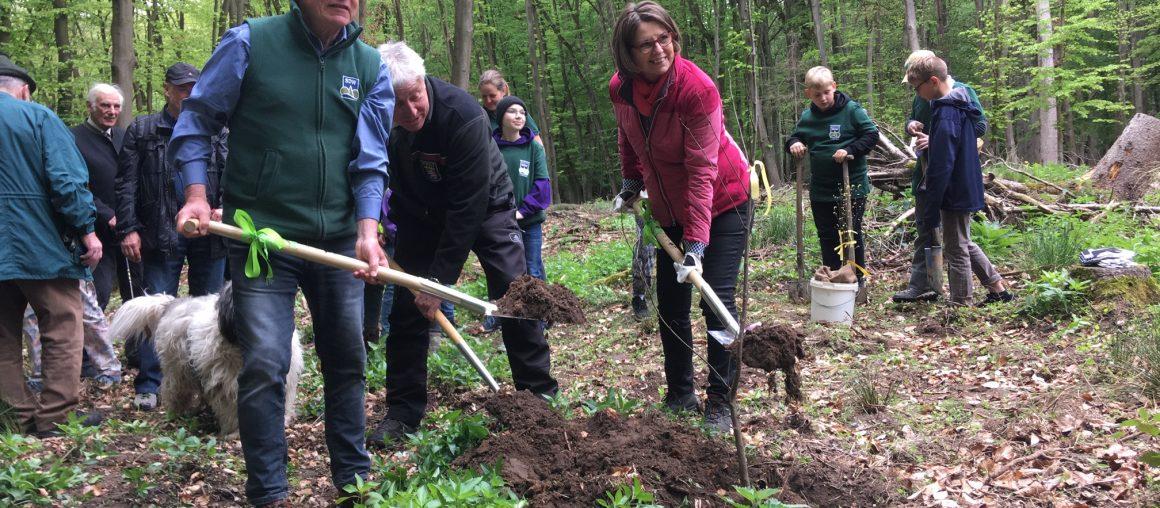 Pflanzung im Bereich des Forstamtes Lampertheim