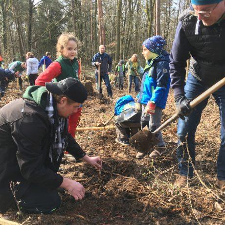 Pflanzung eines Mischwaldes in Neuhof