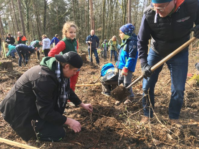 Königsteiner-Schüler pflanzen 500 Edelkastanien